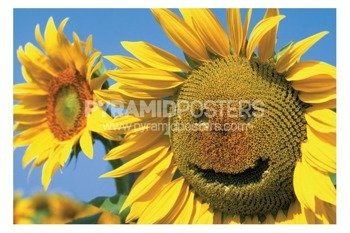 plakat SUNFLOWER SMILE
