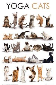 plakat YOGA - CATS