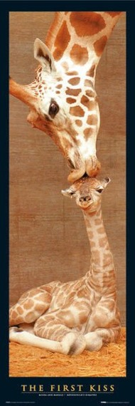 plakat FIRST - KISS