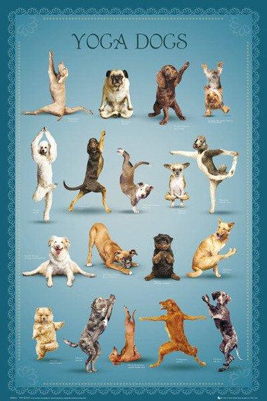 plakat YOGA - DOGS 2